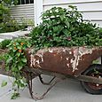 Antique Wheel Barrel